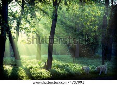 Morning promenade in the forest
