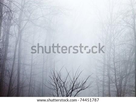 Morning Rain - Appalachian Mountains - stock photo