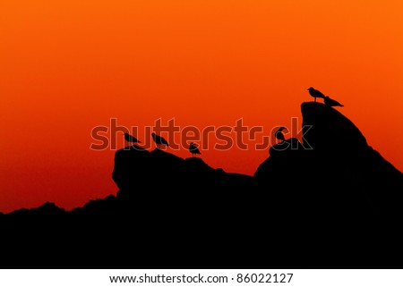 Morning silhouette of a coastal rock