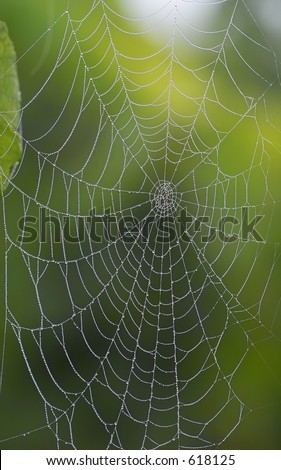 morning spiderweb with diamant water drops