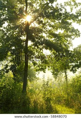 Morning summer forest