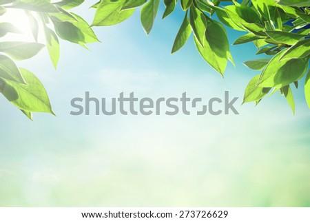 Morning summer sky - stock photo