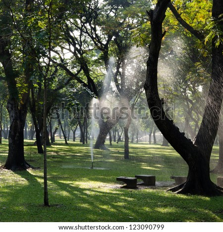 morning sun in the park with green trees