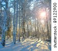 Morning sun in the winter forest. - stock photo