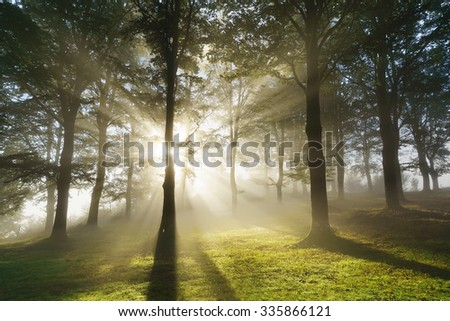 morning sun rays on the forest