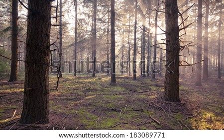 Morning sun shines light rays in the forrest - stock photo