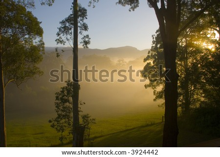 Morning sun shines through the trees in the Promised Land, Bellingen, NSW, Australia - stock photo