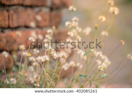 morning sun shining on wildflowers or weeds growing in a grassy field