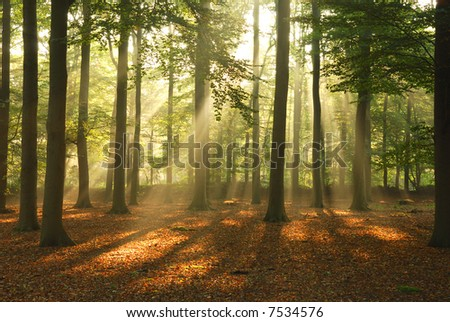 Morning sun, shining through the trees. - stock photo