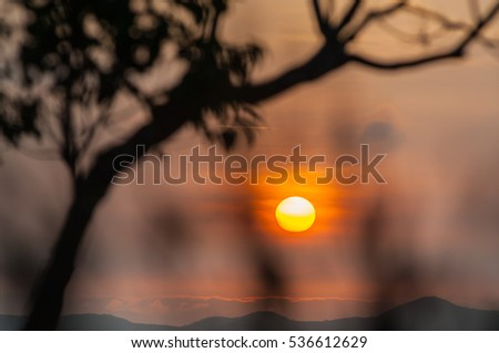 Morning sun silhouettes trees blurred background.