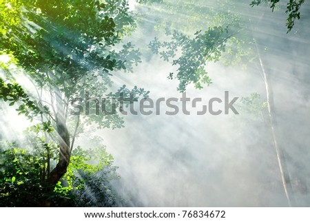 morning sunbeam in tropical fairy forest with smoke, ko laoliang island, thailand - stock photo