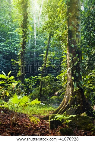 Morning sunbeam shine thru the green forest. - stock photo