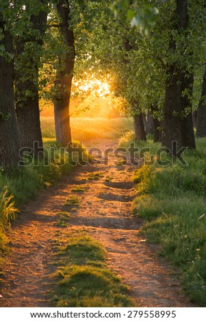 Morning sunbeams pour through trees in a summer forest - stock photo