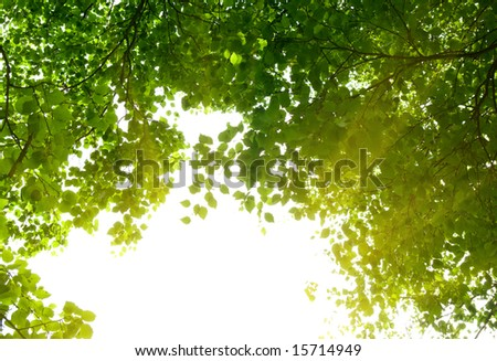 morning sunlight and green trees - stock photo