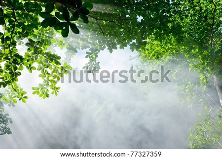 morning sunlight and smoke in tropical forest - stock photo