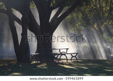 morning sunlight beams through rain covered foliage toowoomba queensland - stock photo