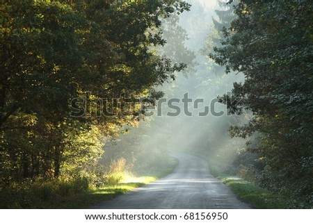 Morning sunlight falls on a country road in the misty autumnal forest. - stock photo