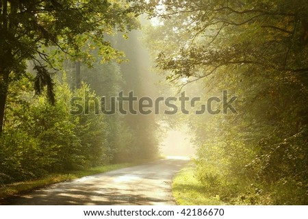 Morning sunlight falls on a forest road with vegetation in the colors of early autumn. - stock photo
