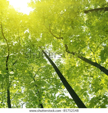 Morning sunlight in the forest. - stock photo