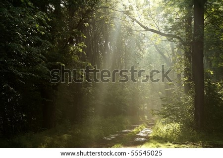 Morning sunlight pass through the trees over the country road in the spring woods. - stock photo