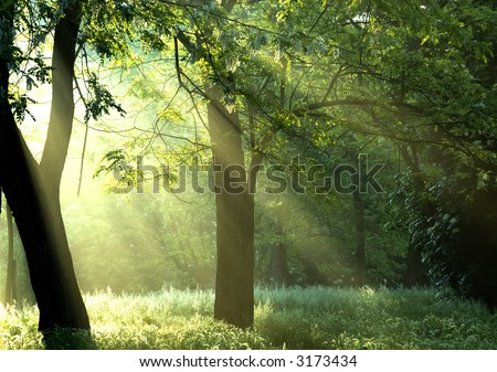 Morning sunrays in the forest - stock photo