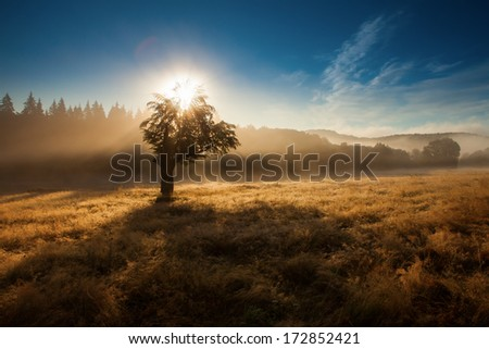 Morning sunrise in fog with single tree and forest in background - stock photo