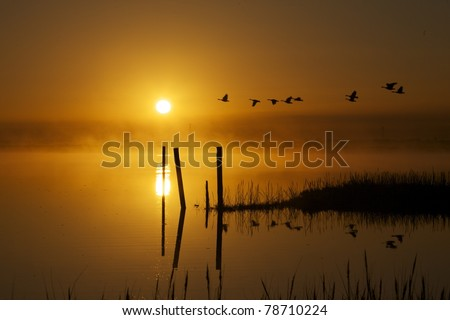 Morning sunrise over march water with a group of canadian geese flying by, fog on the water
