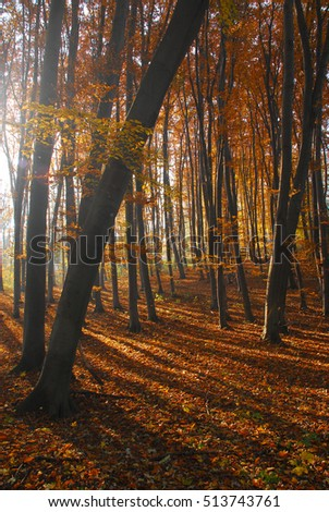 Morning sunshine autumn forest