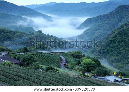 Morning view of tea farms with ethereal fog in the distant valley, in Ping-ling, Taipei Taiwan - stock photo