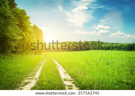 Morning view on field and forest and sunset with bright sun - stock photo