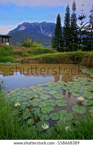 Morning views of Mount Kinabalu and water lily from Kundasang Village, Sabah, East Malaysia