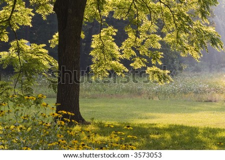 Morning Walnut Tree - stock photo