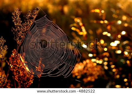 Morning web in autumn - stock photo