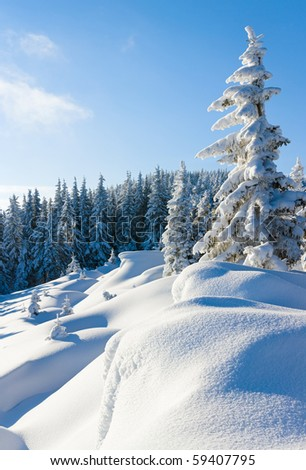 Morning winter calm mountain landscape with beautiful fir trees  on slope (Carpathian Mountains, Ukraine) - stock photo