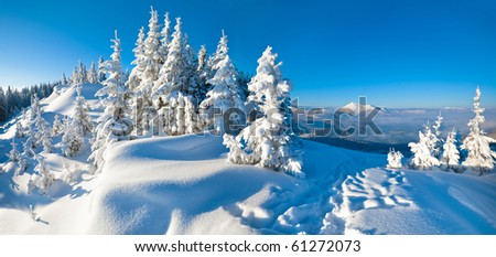 Morning winter calm mountain landscape with fir trees on slope (Carpathian Mountains, Ukraine). Two shots stitch image. - stock photo