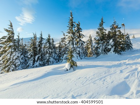Morning winter mountain landscape with clouds and fir trees on slope (Carpathian).