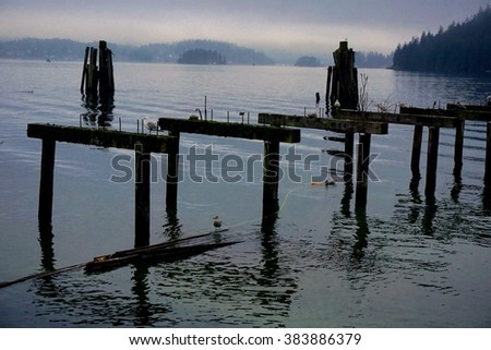 Morning with the birds at Barnet Marine Park, Burnaby, British Columbia