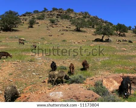 Moroccian landscape - stock photo