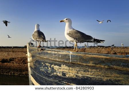 Morocco - Essaouira - stock photo