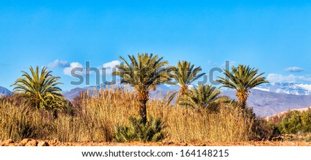 Morocco landscape panorama with palm trees in the foreground and the snowy Atlas Mountains in the background. Copy space - stock photo