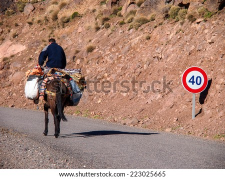 Morocco, Marrakesh, High Atlas Mountains, Toubkal National Park A mule with typical harness and baskets in the river valley near Ansi. - stock photo