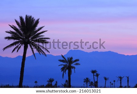 Morocco, Marrakesh, Panorama at dusk of the Atlas Mountains and palm grove in the foreground. - stock photo