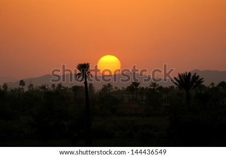 Morocco, Marrakesh, sunset over the palm grove - stock photo