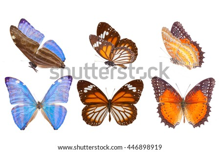 Morpho adonis ice blue, black veined tiger and Red Lacewing butterfly isolated on white background - stock photo