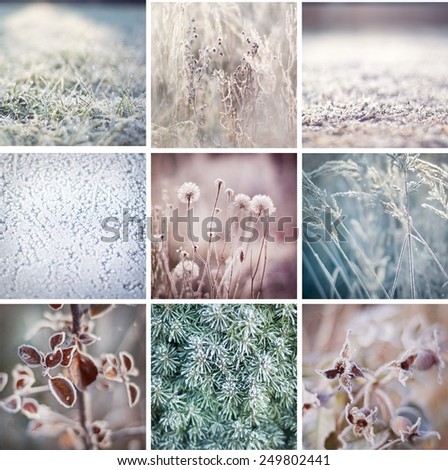 Mosaic of photos of nature during winter. Frozen grass, bush, leaves and buds. Winter postcard background glass freeze. Christmas, boxing day, mosaic. Winter in forest. Nature in winter. Macro  - stock photo