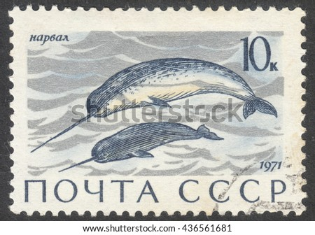 """MOSCOW, RUSSIA - CIRCA JUNE, 2016: a post stamp printed in the USSR shows Enhydra lutris animal, the series """"Marine Mammals"""", circa 1971 - stock photo"""