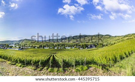 Moselle loop at Trittenheim with vineyard - stock photo