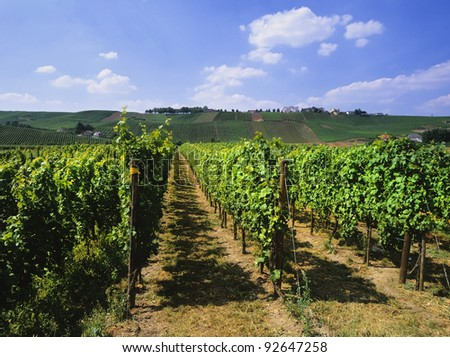 moselle valley vineyards in the boder area between Germany, France and Luxembourg