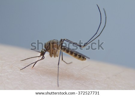 Mosquito bite arms of human  - stock photo