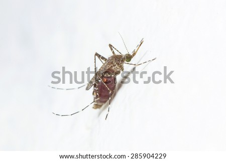 mosquito drinks blood out of man - stock photo